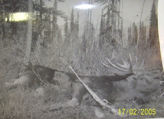 J.W. French's Model 1899 T/D in .250-3000 Savage and a freshly harvested bull Moose in British Columbia.